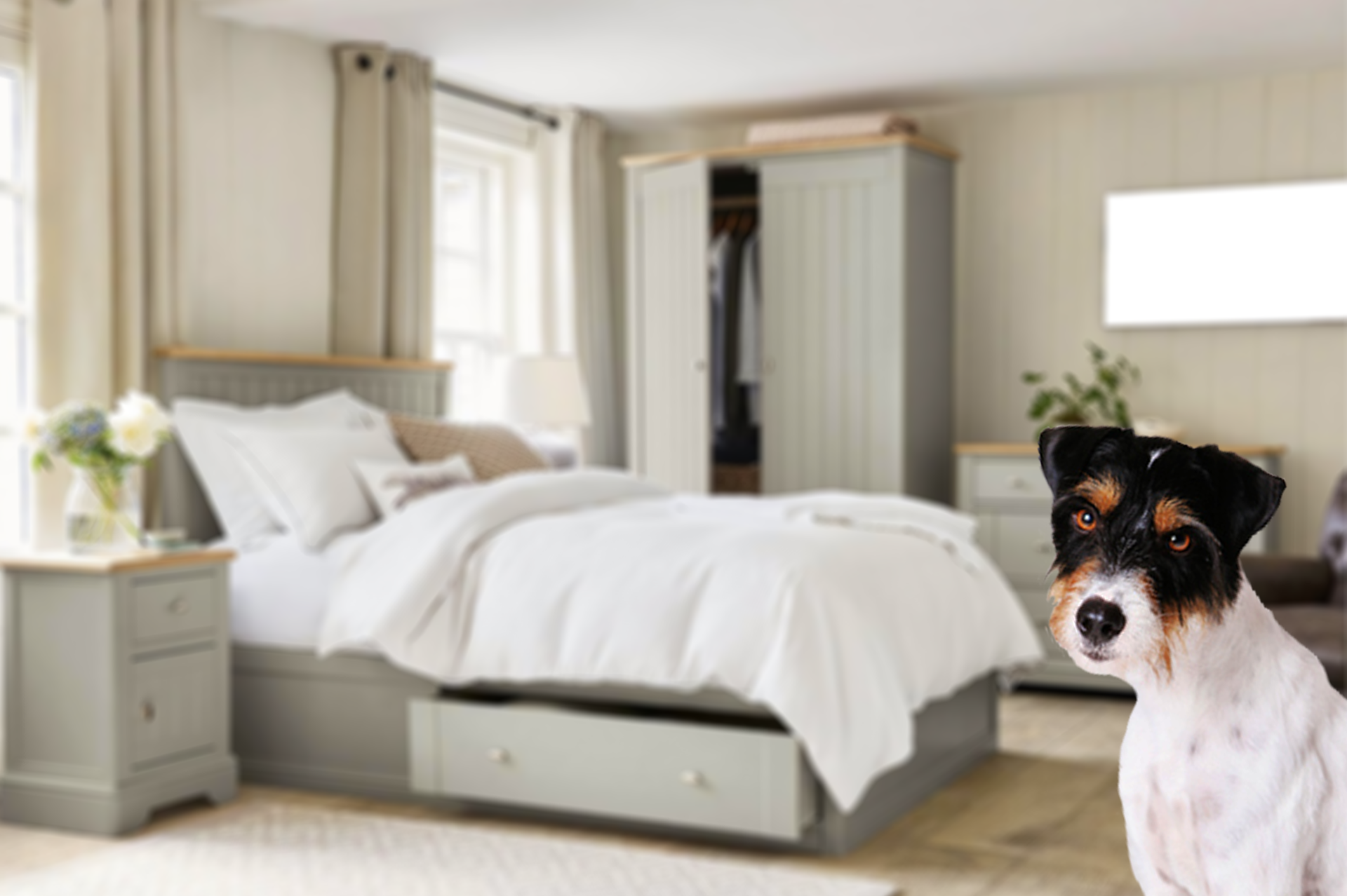 dog with a blurry modern bedroom as background